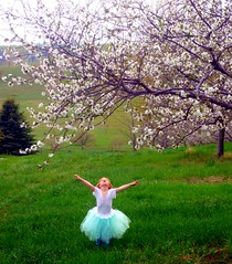 cherry blossom magic (PrincessDoodleBeans Boutique) Tags: flowers girls light tree children cherry ballerina natural blossom michigan mint orchard innocence tulle tutu tutus leelanau princessdoodlebeans