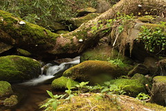 IMG_5771 (Brandon Feagan) Tags: creek waterfall spring stream tn tennessee hike smokies greatsmokymountainsnationalpark gabesmountaintrail sugarcove campsite34