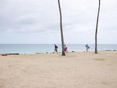 . (bitmapr) Tags: trees coconut kauai horiz 1040355