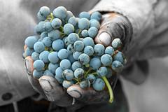 Colores de vendimia y el pueblo del vino
