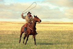 Roping on the High Plains (Todd Klassy) Tags: travel sky horse man west male tourism beauty field grass leather animal horizontal clouds rural landscape outdoors countryside cowboy montana mt action horizon cleveland country working gritty rope knot riding pasture rodeo lariat copyspace dust plains chinook rancher menworking cowboyhat hardwork wildwest horseback stallion saddle throwing oneperson corral twirling ranching roundup stockphoto caucasian darkbay roping lasso occupation greatplains stockphotography herding modelrelease reins oneanimal americanquarterhorse colorimage agritourism americanculture blainecounty lassorope westernamerica montanacowboy horseherder cowboylasso toddklassy montanaphotographer