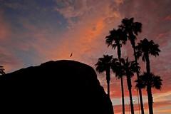 Nuestra regin (FOTOARICA) Tags: chile azul morro playas arica
