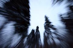 zooming in (-Antoine-) Tags: park blue trees winter snow canada motion blur tree nature forest movement blurry zoom quebec snowy hiver sigma bleu arbres motionblur québec invierno neige burst 1020mm 2008 1020 foret arbre parc saguenay gauthier forêt flou mouvement chicoutimi zooming wintery sigma1020mm bouge zoomburst sigma1020 rosaire hivernal rosairegauthier saguenaylacstjean saguenaylacsaintjean rosairegaut0102 ©antoinerouleau