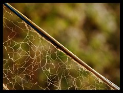 we(B)okeh!! (Amar Jain) Tags: green spider bokeh web diagonal hbw
