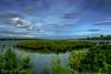 Mangrove #2 at Serangan Island (Sayid Budhi) Tags: bali mangrove bakau serangan seranganisland pulauserangan hutanbakau