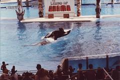 Seaworld (Den Batter) Tags: 1989 seaworld