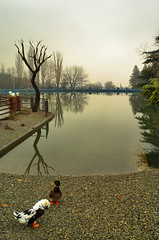 Lake and Ducks on a Misty Winter Day in Mellat Park, Tehran, Iran (Persia) (eshare) Tags: trees winter lake reflection tree pool misty landscape persian duck pond iran foggy gimp ducks persia basin iranian tehran  iranians teheran  persians    mellatpark   urbanparks  kakadoo  sonyalphadslra100     sal20f28     100 sonyalpha20mmf28lens 2028    mellatparklake mistywinterday