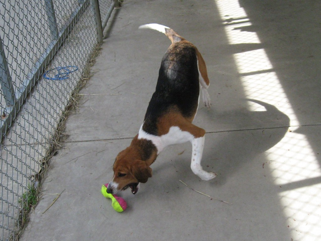Molly chases a toy