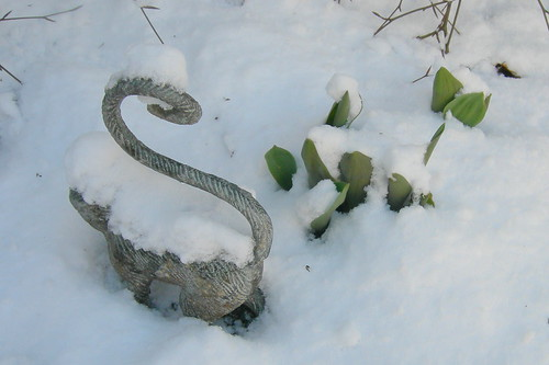 Garden Monkey Passes By Tulips in Snow