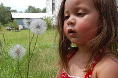 What Did You Call This? (Lady Drummond) Tags: ocean trees boy red sea summer people woman plants dog sunlight shells man fall beach nature girl grass rock fog stone fruit kids cat fence children asian glasses bride waterfall moss kid crazy sand holding hands rocks surf waves silent play phone christ post stones sleep harvest roots earring cellphone jewelry run velvet dandelion read medical teen doctor swamp hammock porch grapes surprise crucifix cypress column paitent