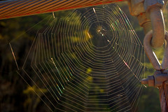 Spider Dream Home (the waterfallhunter) Tags: sunlight spider web spiderweb nikond50 suspensionbridge rabuncountygeorgia georgiastateparks hurricanefalls loriwalden talluahgorge