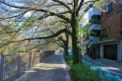 町田樹 画像84