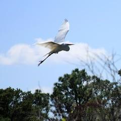heron squ