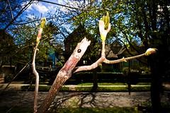 BLACK LADYBUG.FFX © Florbela's Fotographix.IMG_8579 (florbelas fotographix) Tags: trees sky verde green nature skyline vancouver insect spring interesting different unique bugs ladybug unusual ffx grn blackladybug florbelasfotographix