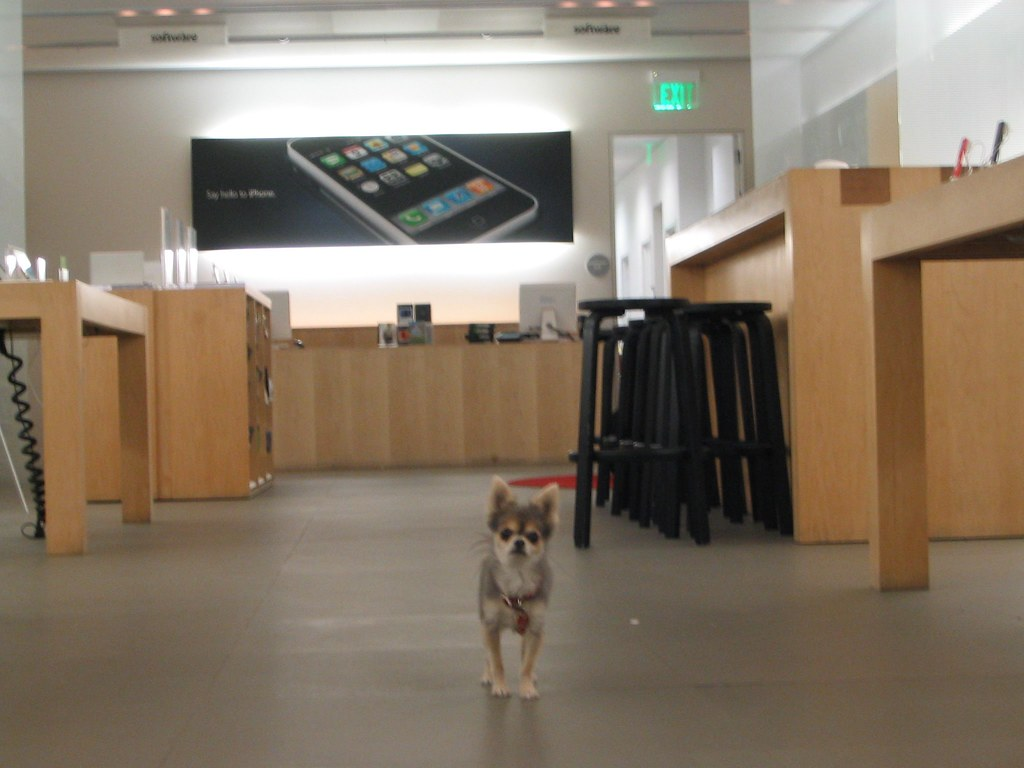 Bluey in the Apple Store after hours