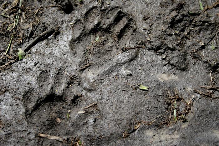 04-28-paws