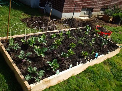 garden - week 3