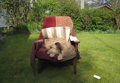 finn, asleep