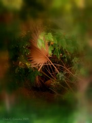 Another Dimension (Chris C. Crowley) Tags: woods scenic ethereal mysterious artisticphotography anotherdimension bigtreepark digitalgraffiti itsmagical chriscrowley adobemasters celticsong22 ambervsshadow southdaytonafl asbeautifulasyouwant