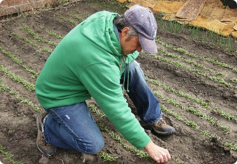 pic: SPIN farming Wally Satzewich