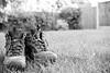 151:365 - Put yer feet up... (ASBO Allstar) Tags: bw grass garden mono boots unitedkingdom bokeh goretex putyourfeetup project365 walkingboots project3661 asboallstar
