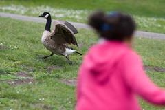 Girl Girl Goose  - 1