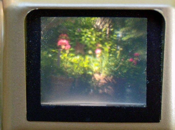 viewfinder geraniums