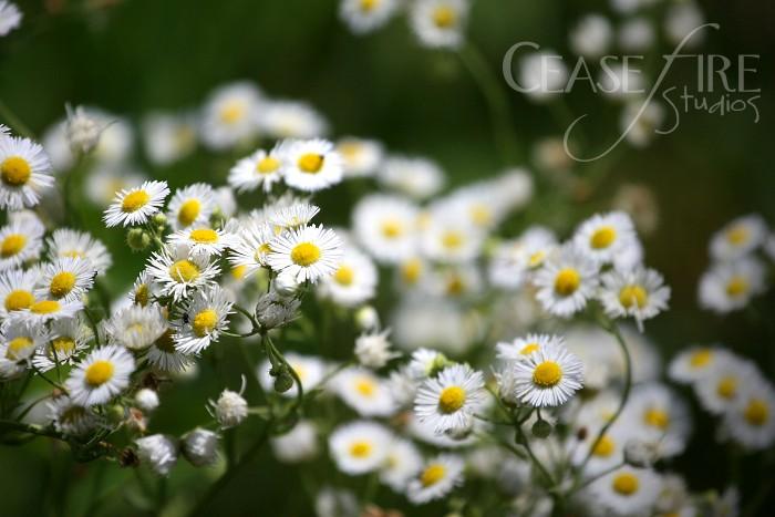 06-26-flowers2