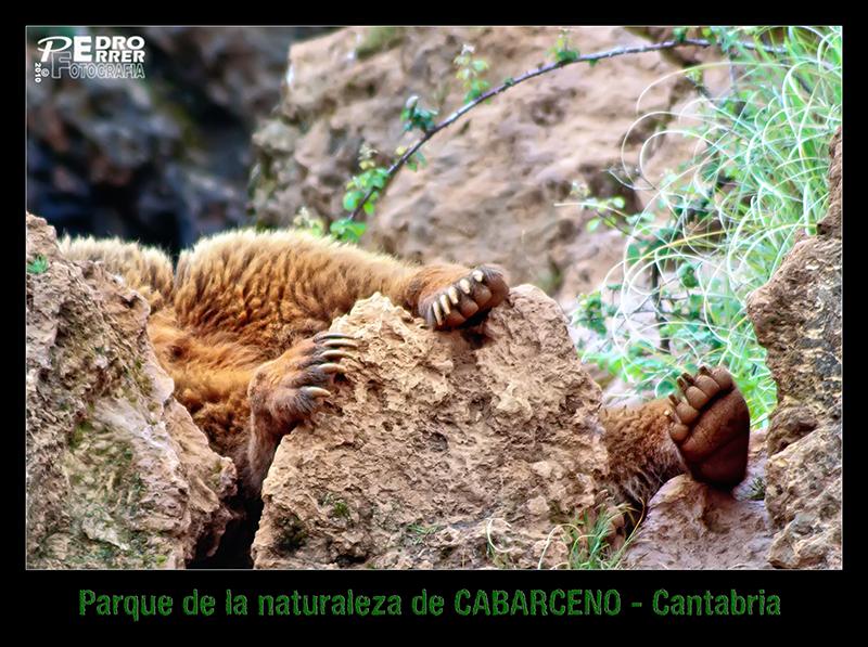 Cabárceno - Tímido