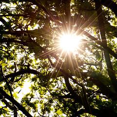 [192/365] (Sander van der Wel) Tags: tree stars sunburst canopy