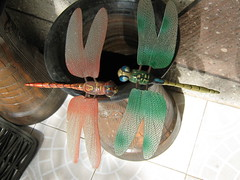 INSECTS (PINOY PHOTOGRAPHER) Tags: world trip travel insect toy asia tour dragonflies philippines filipino bicol pinoy pilipinas iriga camsur