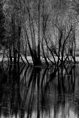 Trees and their Reflections B&W (JimDohms) Tags: trees yosemite mercedriver