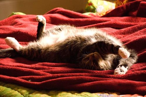 midwinter sunbathing 2
