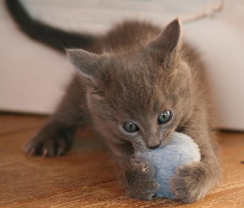 Kittens of Pegusha - Page 2 3245066382_a7e00ae92e