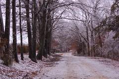 Down the bumpy road (laurienrick) Tags: ice nature icestorm damage arkansas naturaldisaster springdale january2009 icestorm2009