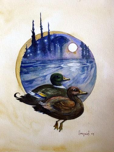 Duck 004