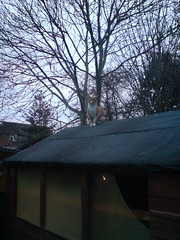 Tilda the Mighty Conquers ... the Shed