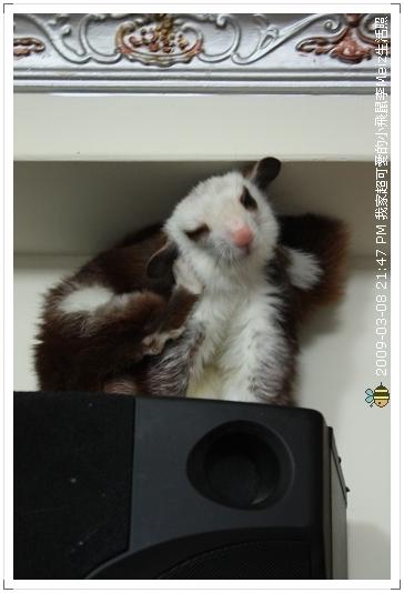 09年二三月小飛鼠Meiz生活照 (8)