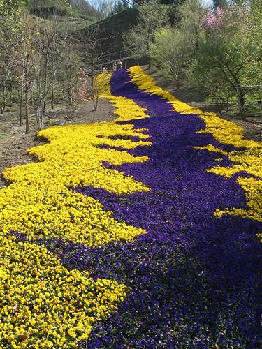 Blütenteppich inmitten des Gartens