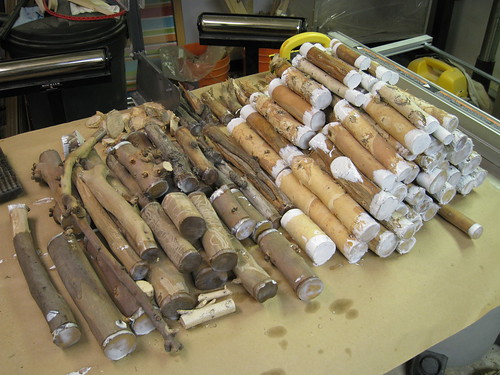 Eucalyptus and paperbark limb pieces sealed with Anchorseal