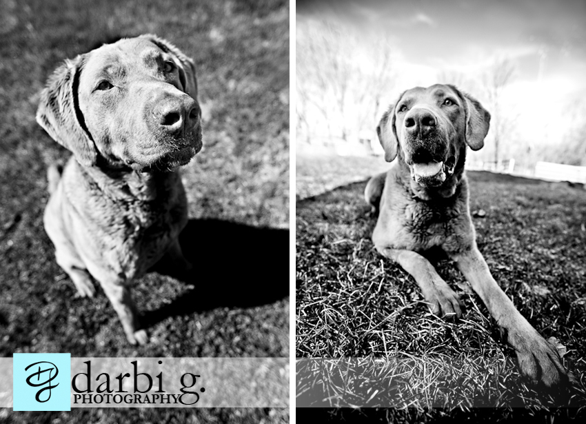 Darbi G photography-dog puppy photographer-_MG_9217-bw