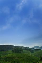 Magical Munnar (Manas Saran) Tags: trees sky green canon landscape 350d bangalore canonef1740mmf4lusm munnar manas saran teaestate loosecanon covershotimages wwwcovershotin
