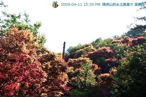 09.04.11台北奧萬大賞楓紅 (26)
