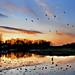 meadowbrook lake