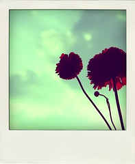 16.365, 1 night, 3 friends ( Fufue ) Tags: blue red sky flower fleur canon rouge switzerland suisse geneva blossom bleu 365 genve polarod project365 450d abigfave