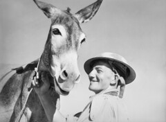 A man with donkey, 1941 (Australian War Memorial collection) Tags: man male animal mammal soldier person jones helmet donkey rope ww2 soldiers mule supply secondworldwar australianwarmemorial 1841 pte damienparer commons:event=commonground2009 dwjones