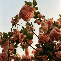 Energy is Eternal Delight (Ilaria ) Tags: flowers 50mm pentax f14 200iso spotmatic ferrara fiori canoscan williamblake pentaxspotmatic supertakumar50mmf14 peletti pelucchi pellicolecoop scannerpeloso iolamiaspotmatic