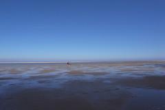 beach (Jos Mecklenfeld) Tags: blue summer people dog sun holland beach water dutch strand walking wadden waddeneiland blauw wandelen nederland thenetherlands noordzee hond northsea zomer ricoh friesland schiermonnikoog mensen gx200