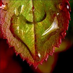 ~ Nature's Love ~