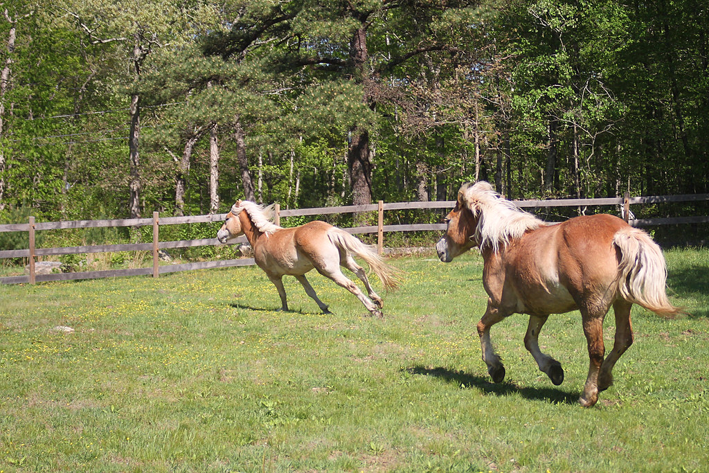 horses 192x